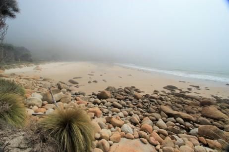 Morning sea fog over Winter Cove