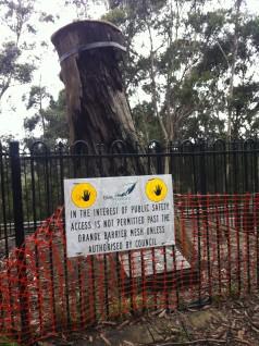 Much-suffered Explorers Tree